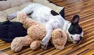 1000+ images about IDEAS: Pet Decor on Pinterest Popcorn