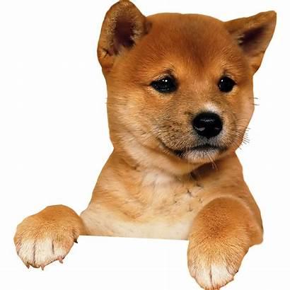 Pngimg Dog