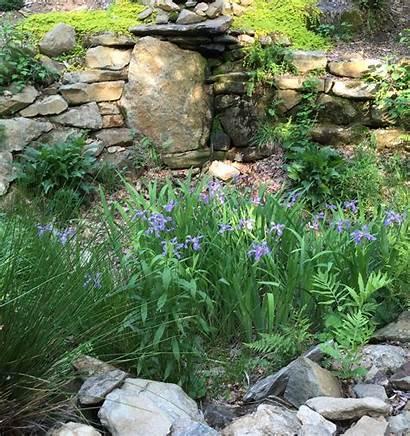 Rain Garden Gardens Build Plants Native Flower