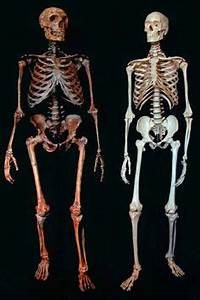 How there's a bit of Neanderthal in all of us: DNA link to ...
