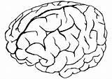 Colorear Cerebro Imprimir Dibujos Humano Cuerpo Como Coloring Te Brain Quieras Figuras Papas Tus Todas Mas sketch template
