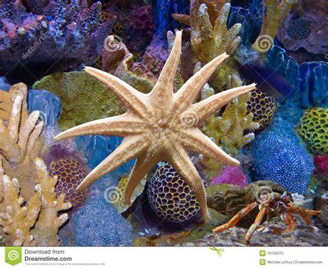 etoile de mer aquarium 233 toiles de mer exotiques d aquarium photos stock image 10195313