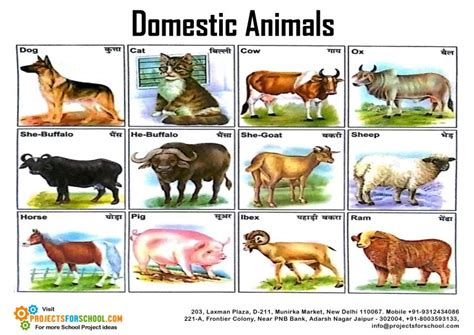 Kids Science Projects Domestic Animals Free Download