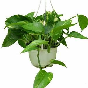 Plantes Vertes D Intérieur Photos : plantes vertes grimpantes d int rieur photos de magnolisafleur ~ Preciouscoupons.com Idées de Décoration