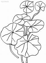 Lily Coloring Pad Pages Flower Drawing Printable Cool2bkids Water Plant Pads Colorings Heart Getdrawings Frog Getcolorings Plants sketch template
