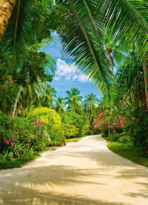 tropical pathway wall mural buy  europosters