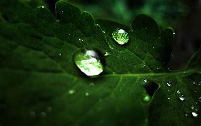 Pflanzen 1920 Widescreen 1200 Water 4k Drops