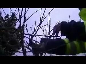Comment Tailler Un Pommier : comment tailler un pommier youtube ~ Dode.kayakingforconservation.com Idées de Décoration