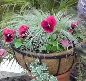 Best 25 Winter hanging baskets ideas on Pinterest