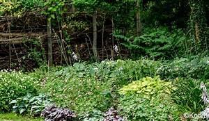 Pflanzen Für Schattengarten : stauden schatten naturagart shop schatten stauden 10 online kaufen naturagart shop stauden ~ Sanjose-hotels-ca.com Haus und Dekorationen