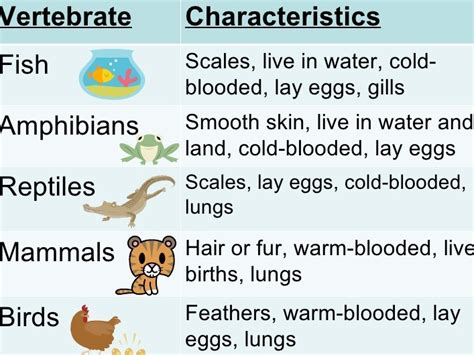 Lesson Plan of Classification & Characteristics of