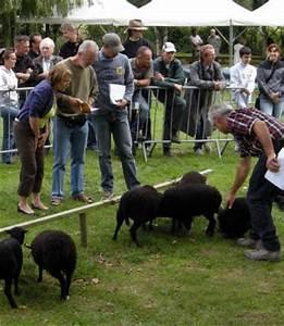 Ouessant Ma Passion : ouessant notre passion mouton d 39 ouessant bienvenue chez ~ Nature-et-papiers.com Idées de Décoration