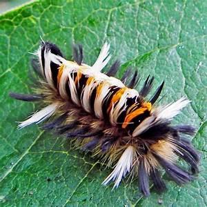 Best 25  Caterpillar Ideas On Pinterest