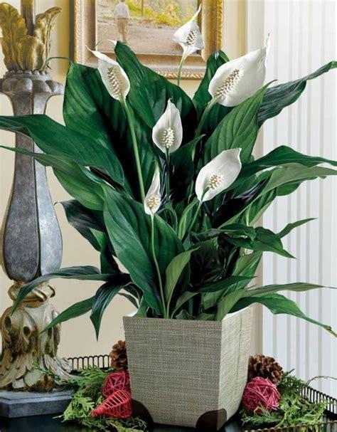 Pflanzen Im Zimmer by Pflanzen Im Zimmer Pflanzen Im Schlafzimmer Topfblumen