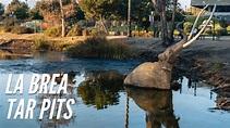 Exploring the La Brea Tar Pits in Los Angeles in 2020 ...