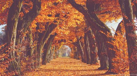 Pic > Fall Backgrounds Tumblr Desktop Background