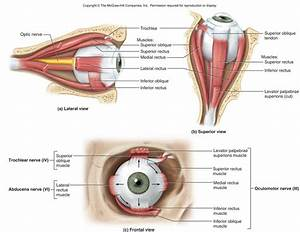 Lab 9 Senses-Eye - Anatomy 2200 with Williams at ...