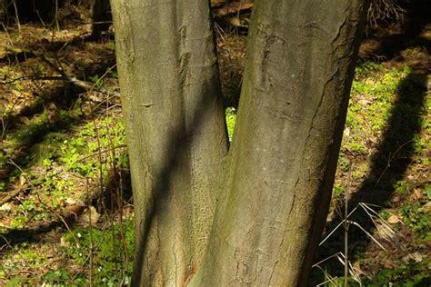fungsi batang  tumbuhan    ketahui