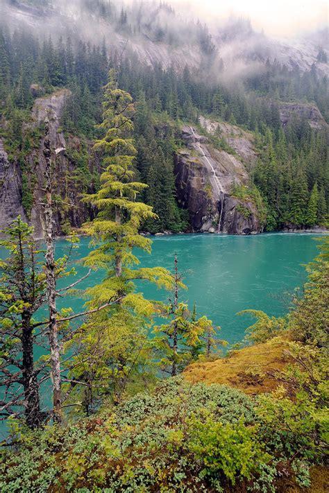 Alaska Forest Alaska Wilderness Charters Juneau Alaska 907 ...