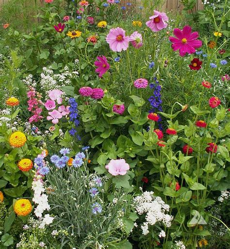cottage garden wildflower seed mix farmer
