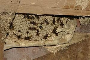 Welchen Geruch Mögen Wespen Nicht : bund faltblatt mit hinweisen zum umgang mit wespen und ~ Articles-book.com Haus und Dekorationen