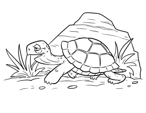 Dibujos de tortugas para colorear DibujosWiki com