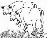 Cow Coloring Printable Cows Adults Farm Cool2bkids Drawing Getdrawings Preschoolers sketch template