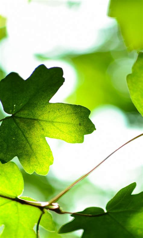 Green Leaves 4k Wallpapers  Hd Wallpapers  Id #19188