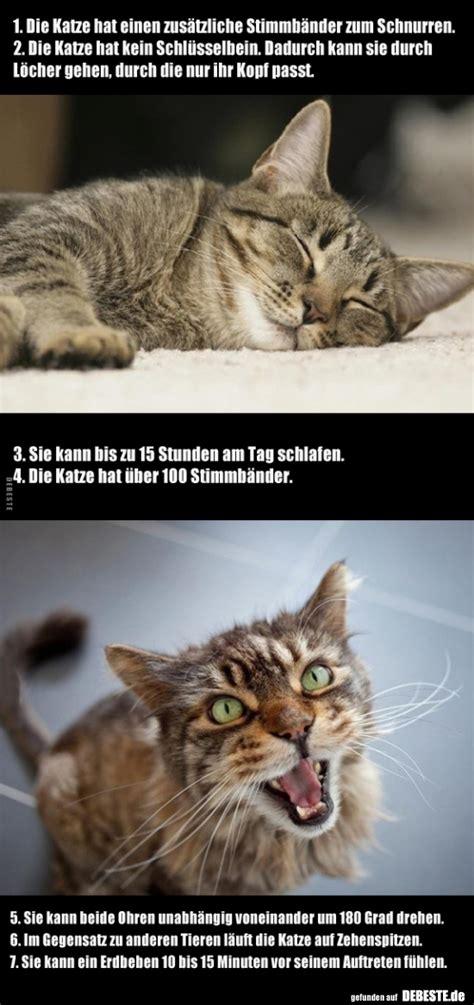 die katze hat einen zusaetzliche stimmbaender zum