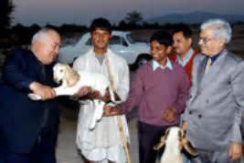 issgpu indian society  sheep  goat production