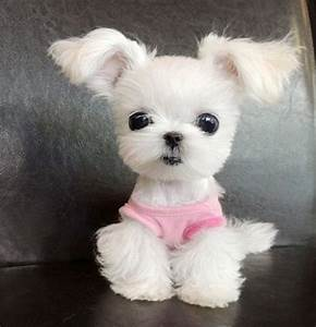 cute small fluffy puppy breeds