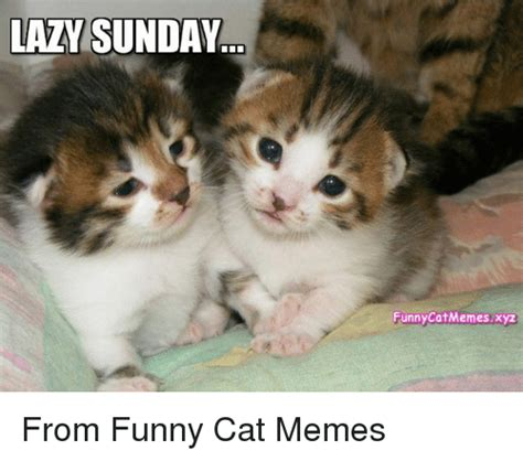 Funny Lazy Memes - 25 best memes about funny cats memes funny cats memes