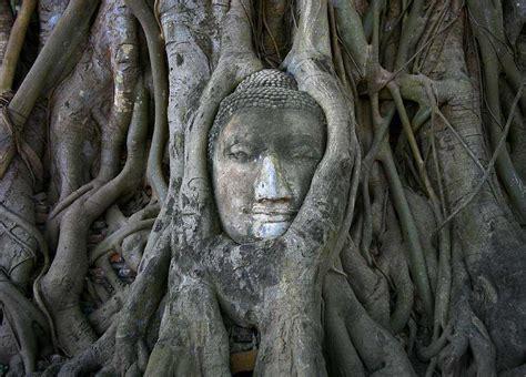 amazing buddha statues   world travel
