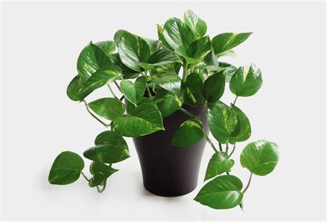 best office desk plants desk plants will bring life to your office cool material