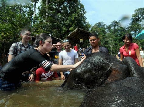 pusat konservasi gajah kebangsaan kuala gandah tarikan