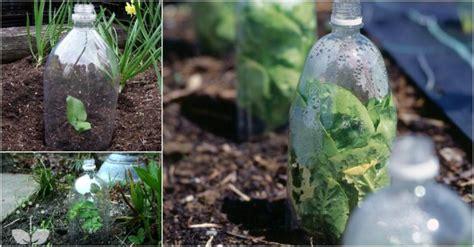 plastic water bottle greenhouse