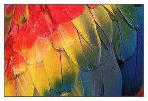 Blau Rot Gelb Grün : rgb rot gelb blau foto bild tiere zoo wildpark ~ A.2002-acura-tl-radio.info Haus und Dekorationen