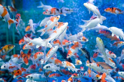 Animated Moving Fish Wallpapers - moving fish tank wallpaper wallpapersafari