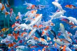 Free Moving Fish Backgrounds Desktop