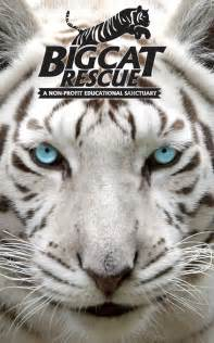 big cat rescue big cat rescue android apps on play