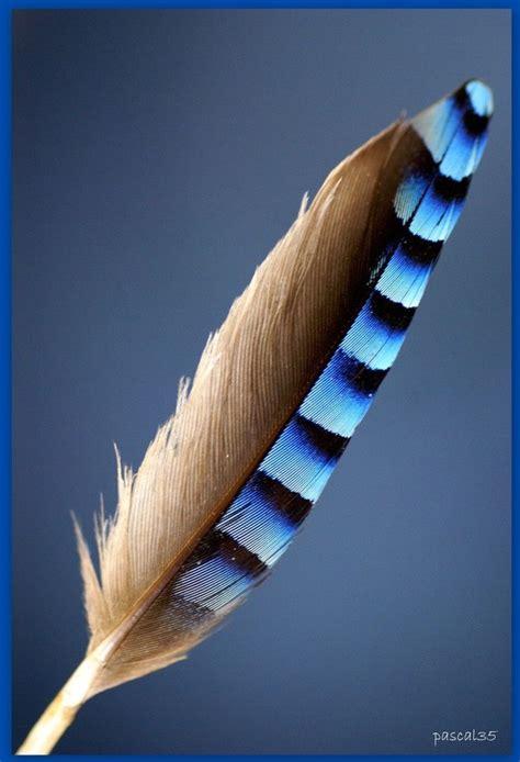 les 25 meilleures id 233 es concernant tatouage de geai bleu