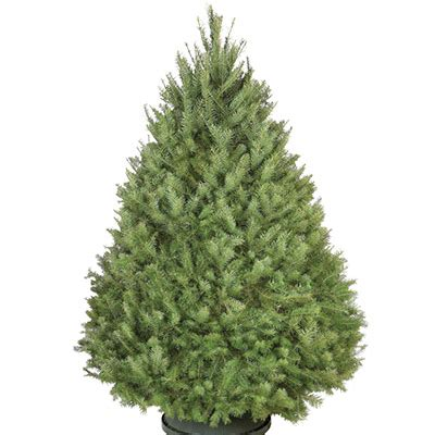 shop  types  real christmas trees  home depot
