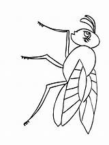 Fly Coloring Printable Animals Fliege Ausmalbilder Ausdrucken Malvorlagen Kostenlos sketch template