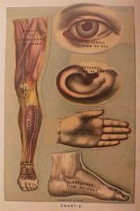 92 Best Vintage Anatomy Images On Pinterest