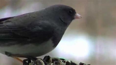 identify  bird  minnesota midwest nature birds