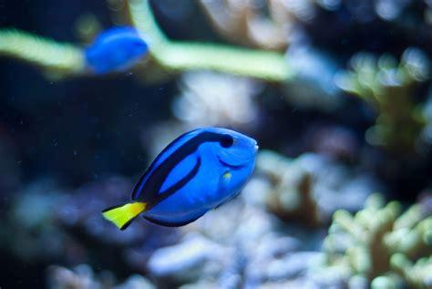 freshwater aquarium fish species cpt nemos tank