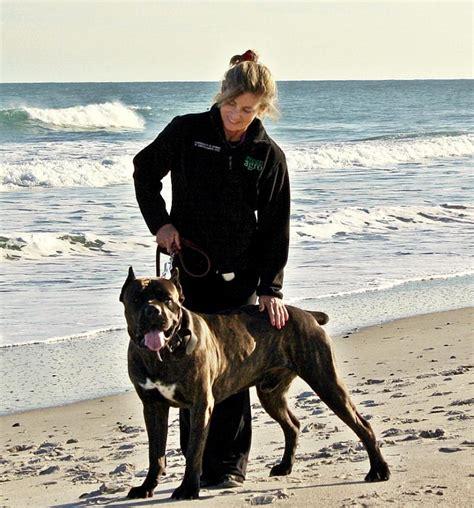 corso cane mondo maggie beach den run took pirates today breeder