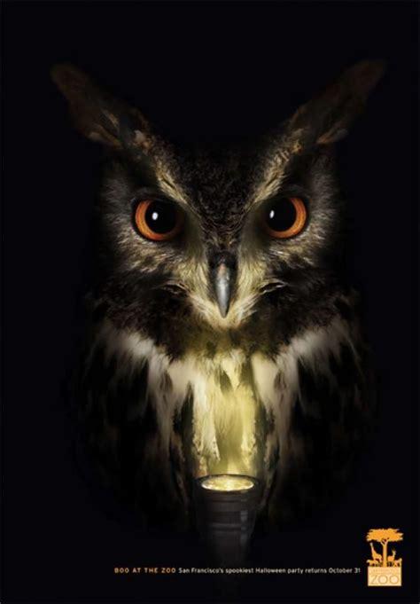 scary owl pictures corn maze ideas owl