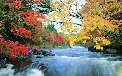 Fall Foliage Desktop Wallpapers Leaves