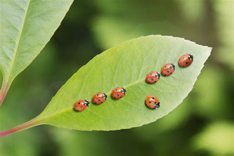 Garden Insect Pests And What To Do About Them